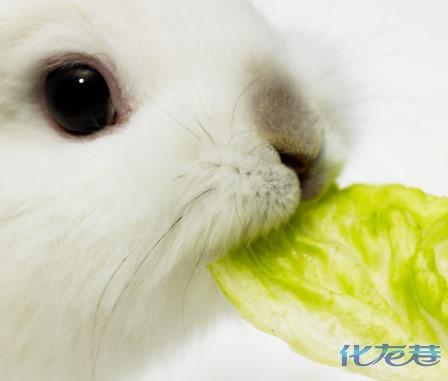 小兔子吃东西的照片_八卦江湖俺的小兔子吃饭偷拍俺是爱兔一族