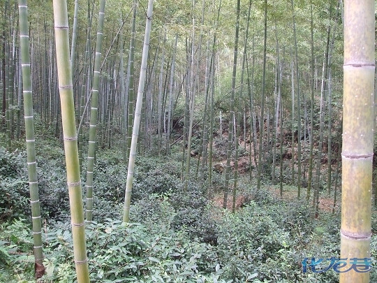 浙江湖州长兴水口农家乐自驾游线路