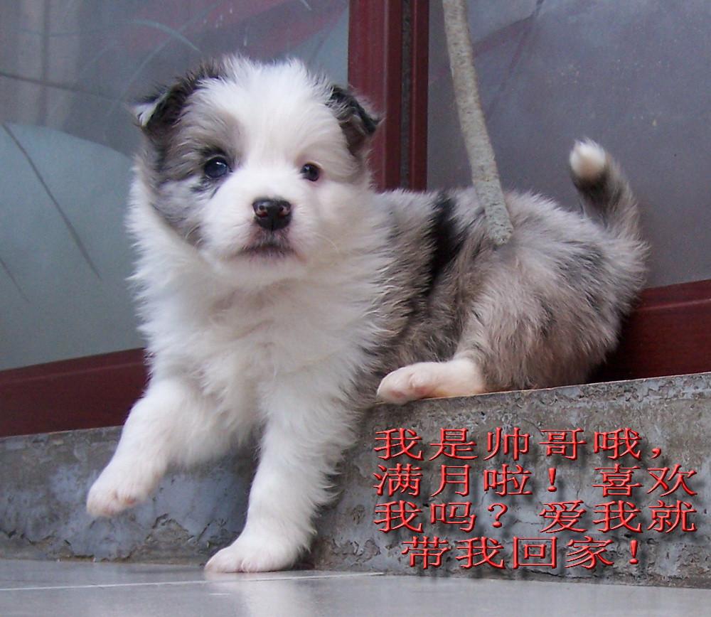 http://bbs.hualongxiang.com/read.php?tid=7488917 2011.2.