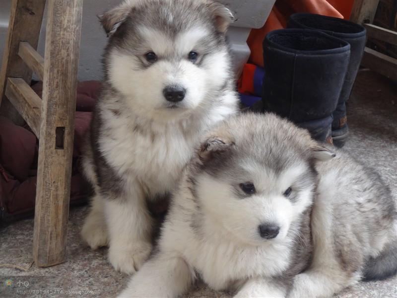 家有四只大灰狼~~还有一群小狼崽~~连载记录