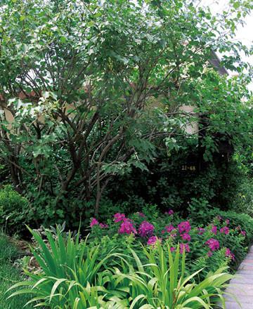 深绿色的大戟属植物成为浅绿且发白色的蕨类植物的