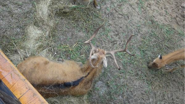 无锡动物园太湖欢乐园,锡惠公园亲子自驾游2日